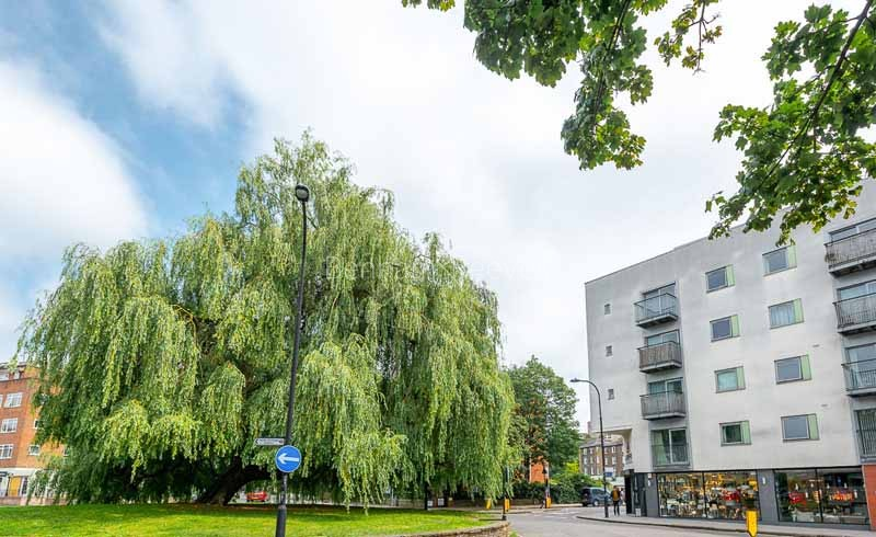 South Hampstead Area Guide - Image 5