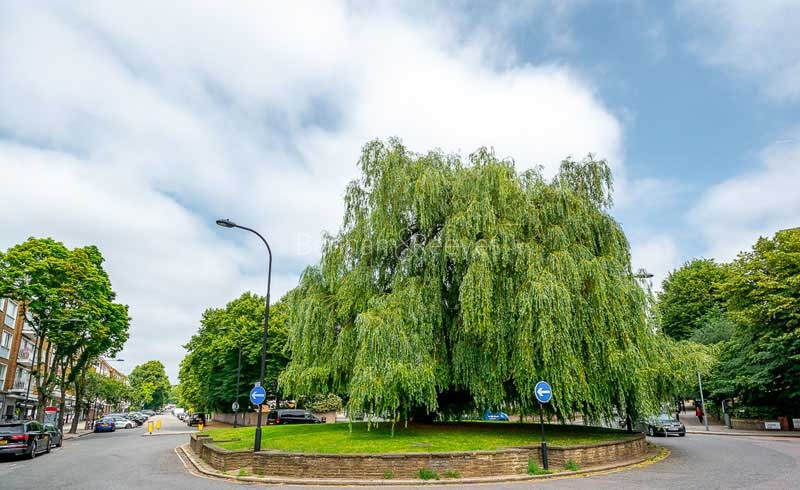 South Hampstead Area Guide - Image 6